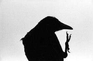 raven-2
